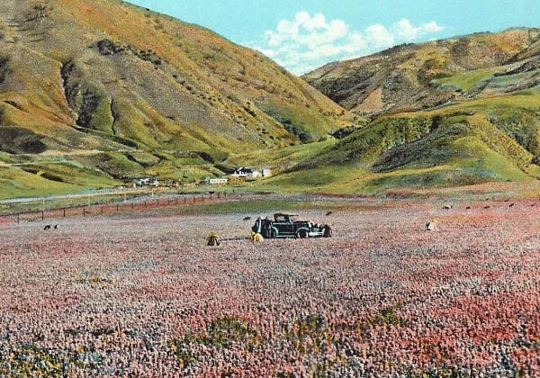 Wildflower Super Bloom in California